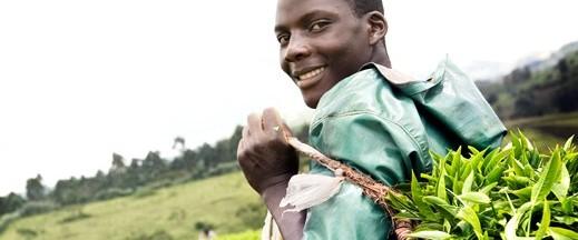 Igara & Kayonza Uganda