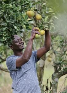 Nyame Akwan Farms (35)